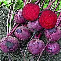 Зепо Ф1 5000 сем. Професійне насіння