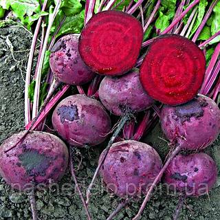 Семена свеклы Зепо F1 5000 сем. Професійне насіння