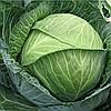 Семена капусты б/к Бригадир F1 20 сем. Садыба Центр