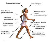 Палиці для скандинавської ходьби: критерії вибору, правила використання