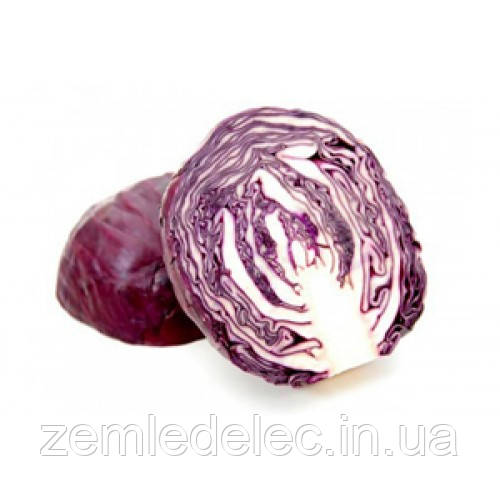 Семена капусты к/к Корсар F1 0,5 гр. Nasko