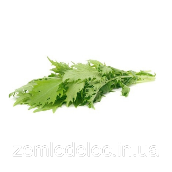 Мизуна зеленая (R) 50 гр. Коуэл салат горчичный