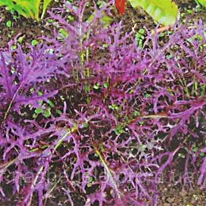 Семена салата Мизуна красная 50 гр. Коуел (Sais)