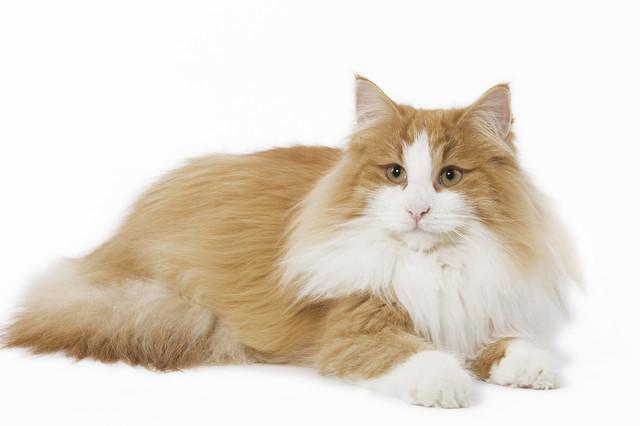Корм для поддержания вида шерсти у взрослых кошек Trainer Personal Beauty