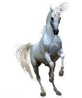 Антигельминтики для коней