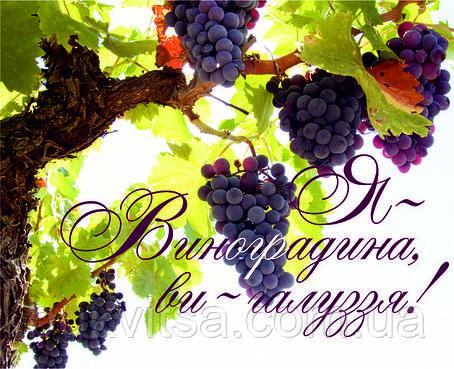 Міні-листівка:  Я - Виноградина, ви - галуззя!  # 118, фото 2