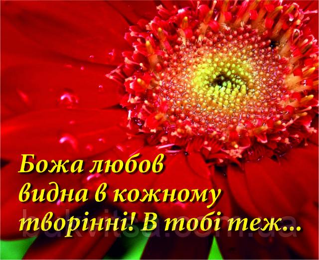 Міні-листівка: Божа любов видна в кожному творінні! В тобі теж...  # 129