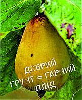 Міні-листівка: Добрий грунт = гарний плід #175