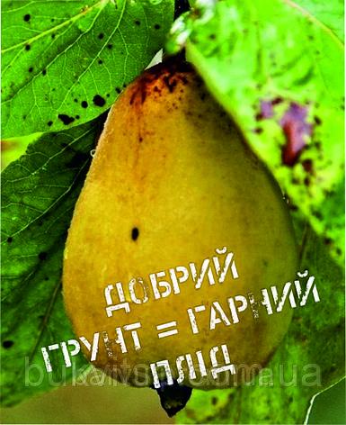 Міні-листівка: Добрий грунт = гарний плід #175, фото 2