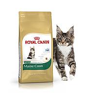 Корм для котят Мейн-Кун от 3 до 15 мес.  Royal Canin Maine Coon Kitten 4 кг
