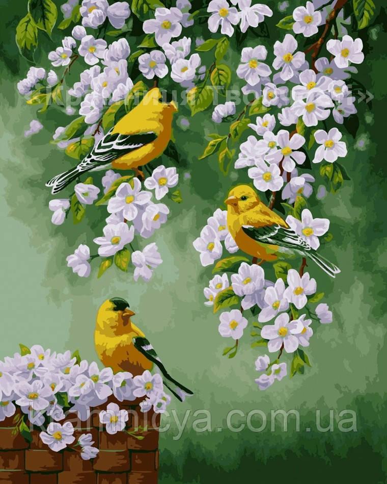 Картина по номерам 'Зяблики на яблоне', 40х50см (КНО2427)