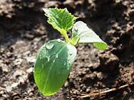 Минерально-органические удобрения (листовая подкормка)