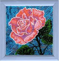 Роза БФ 939