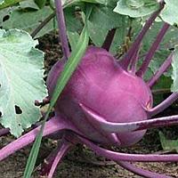 Семена капусты кольраби Фея 0,5 г. Nasko