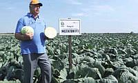 Семена среднего высокоурожайного гибрида капусты с превосходным вкусом при квашении сорт Мегатон F1