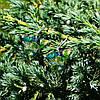 """Серьги """"Пальмовые листья"""", фото 2"""