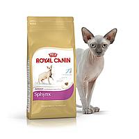 роял канин для британских котят Royal Canin