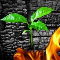 Средство для устранения запаха гари после пожара Organics USP-80 1л