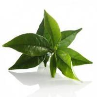 Зеленого чая гликолевый экстракт – От кругов под глазами, 1 литр