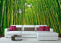 Фотообои Бамбуковая роща