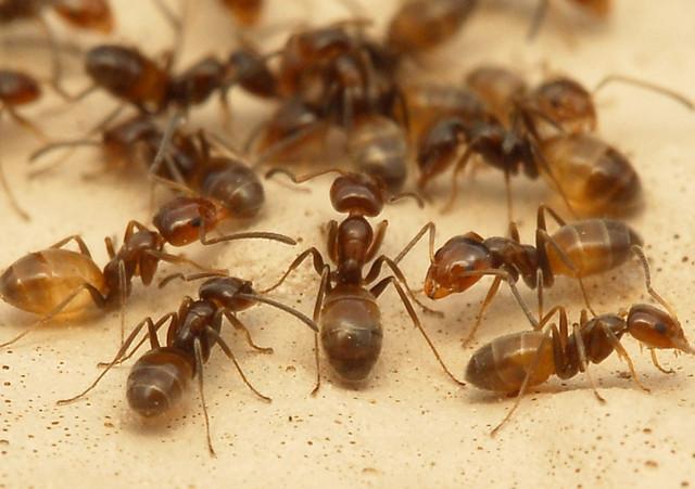 Средства для борьбы с тараканами, клопами, блохами и муравьями