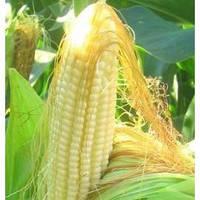 Экстракт концентрат Кукурузных рылец – коррекция фигуры, 1 литр