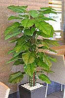 Искусственное дерево Ауреум