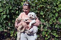 Скорая ветеринарная помощь одесса