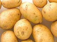 Картофель Аризона 3кг, фото 1
