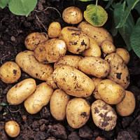 Картофель Мелодия 3кг
