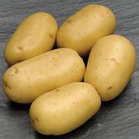 Картофель Гранада сетка  3кг , фото 1