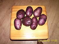 Картофель Смуглянка 3кг