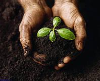 Использование удобрений при выращивании подсолнечника.