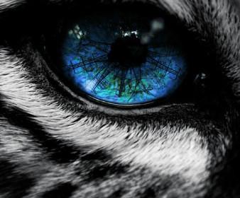 Гель-лаки My Nail 9 мл кошачий глаз