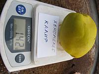 Хеномелес саженцы (айва японская) окулированный сорт калиф саженцы плодовых