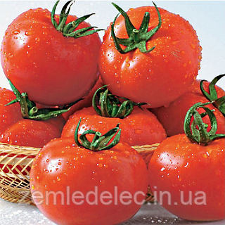 Семена томата Шеди Леди F1 10 сем. Садыба Центр