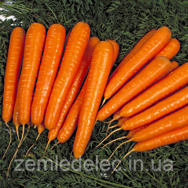 Семена моркови Лагуна F1 400 сем. Садыба Центр