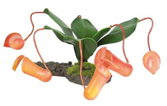 Растение-хищник  для террариума 8см - Интернет-зоомагазин «Усатый-Полосатый» в Днепре