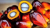 Пальмовое масло применение и производство