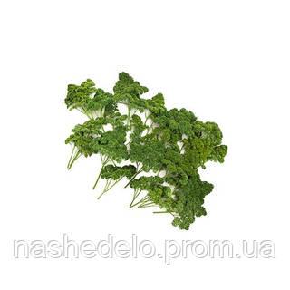 Семена петрушки Рина 50 гр. Rijk Zwaan