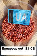 Гибрид кукурузы Днепровский 181 СВ (ФАО 180)