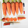 Семена моркови Танжерина 100 000 сем  Takii Seeds