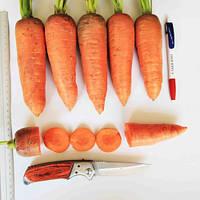 Танжерина морковь 100 000 сем  Енза Заден