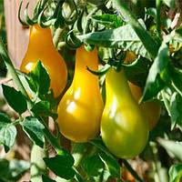 Перун семена томата индет желтого Moravoseed 1 000 г