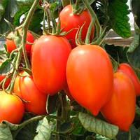 Колибри семена томата индет. черри Элитный ряд 1 г