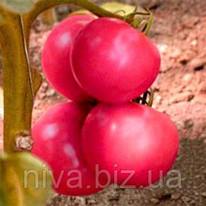 Пинк Топ F1 семена томата индет. розового NongWoo Bio 500 семян