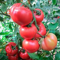 Ханни Мун F1 семена томата индет. розового Clause 250 семян
