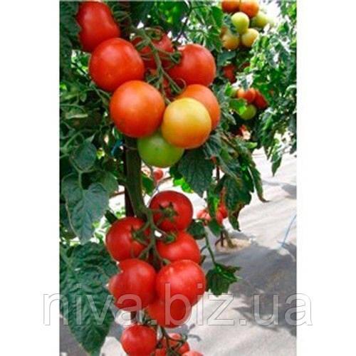 Атерон F1 семена томата индет. Moravoseed 500 семян