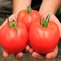 Луизет F1 семена томата индет. Lark Seeds 5 000 семян