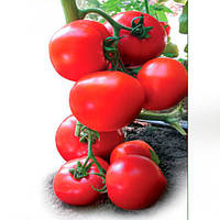Ядвига F1 семена томата полудет. типа Kitano Seeds 1 000 семян